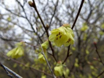 花の山0448.jpg