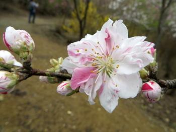 花の山0458.jpg