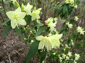 花の山0462.jpg
