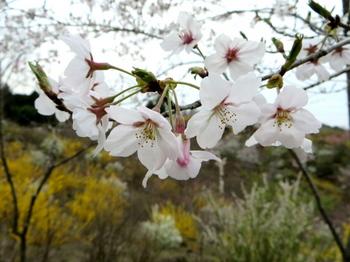 花の山0478.jpg