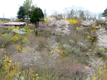 花の山0521.jpg