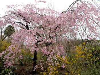 花の山0539.jpg