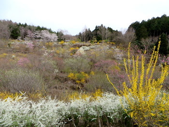 花の山0542.jpg