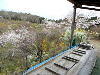 花の山0570.jpg