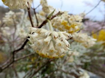 花の山0573.jpg