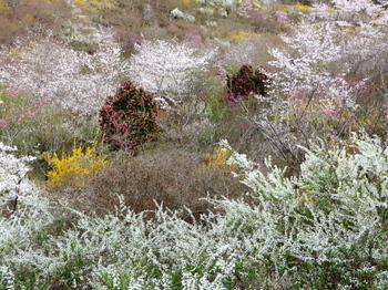 花の山0587.jpg