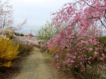花の山0600.jpg