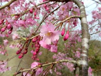 花の山0601.jpg