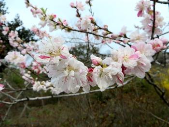 花の山0607.jpg