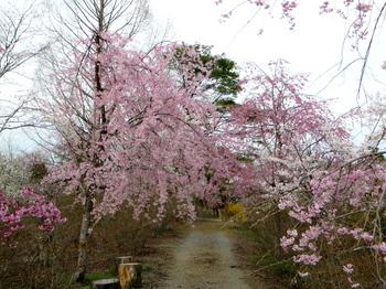 花の山0615.jpg