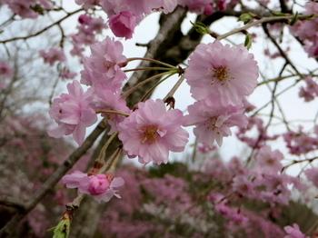 花の山0618.jpg