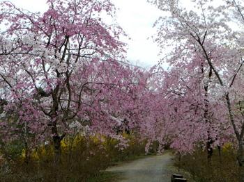花の山0636.jpg