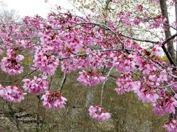 花の山0642.jpg