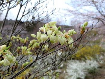 花の山0677.jpg