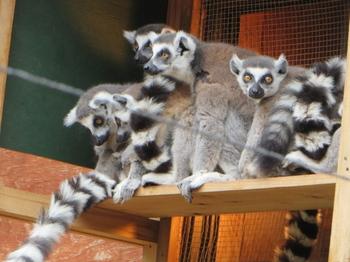 こども動物自然公園7564.jpg