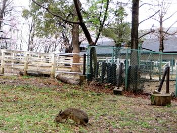 こども動物自然公園7586.jpg