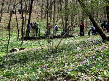 万葉自然公園7234.jpg