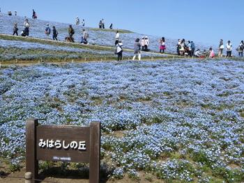 国営ひたち海浜公園9691.jpg