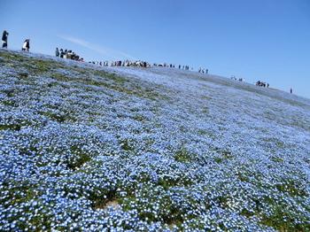 国営ひたち海浜公園9760.jpg