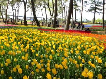 国営ひたち海浜公園9795.jpg