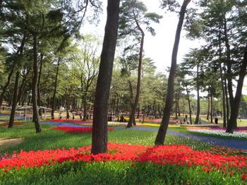 国営ひたち海浜公園9821.jpg