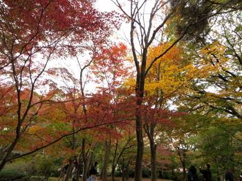 国営武蔵丘陵森林公園7453.jpg