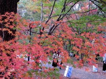 国営武蔵丘陵森林公園7465.jpg