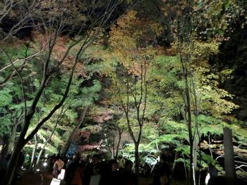 国営武蔵丘陵森林公園7579.jpg