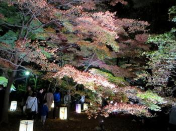国営武蔵丘陵森林公園7646.jpg