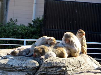 東武動物公園8011.jpg